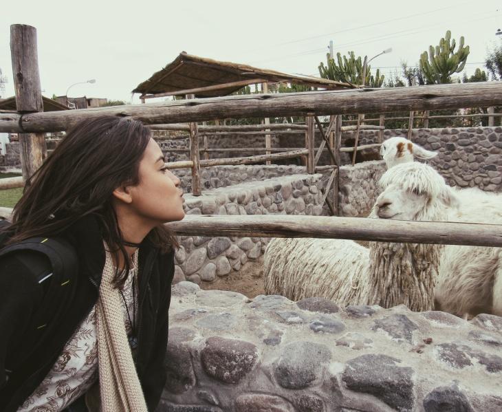 Fazenda de Lhamas em Arequipa - Peru